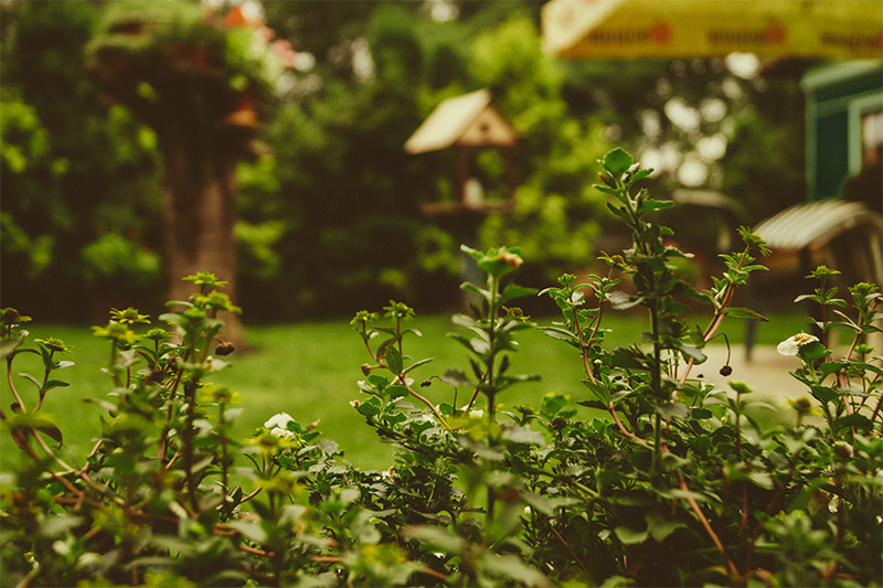 Five ways to add value to your home in your garden